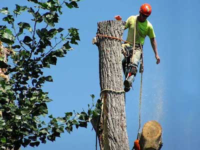 Large tree removal service in West Des Moines, IA
