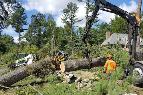 Tree service workers removing a fallen tree