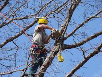 Tree trimming service work