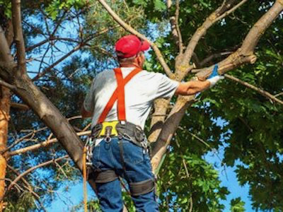 Tree trimming service using hand shears